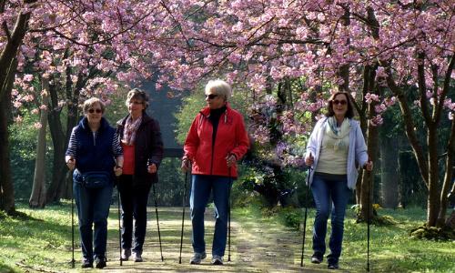 gruppe-nordic-walking
