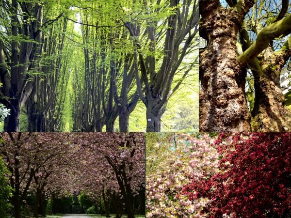 Fotos & Bearbeitung: W. Lachermund