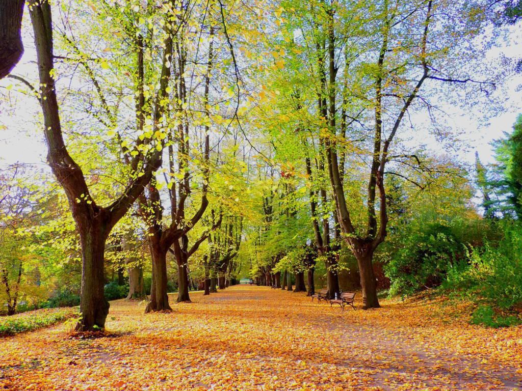 Rombergpark im Herbst