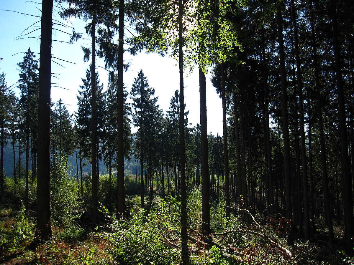 Bunte Wälder
