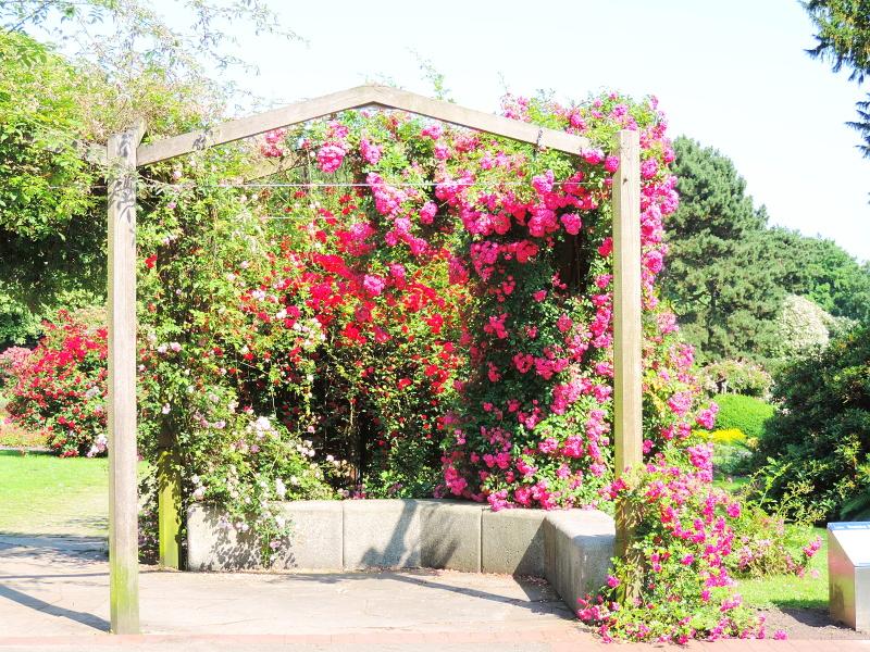 Rosenfest im Westfalenpark
