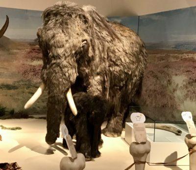 Eiszeit Safari im Museum in Hamm